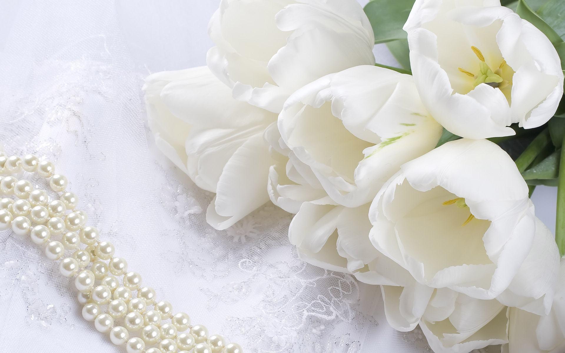 hoa tulip màu trắng